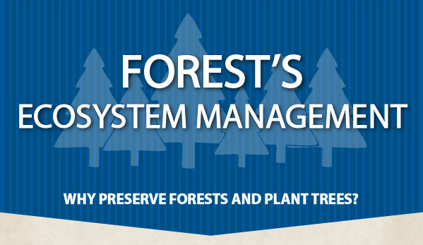 Infographic: Why Preserve the Forest and Trees?